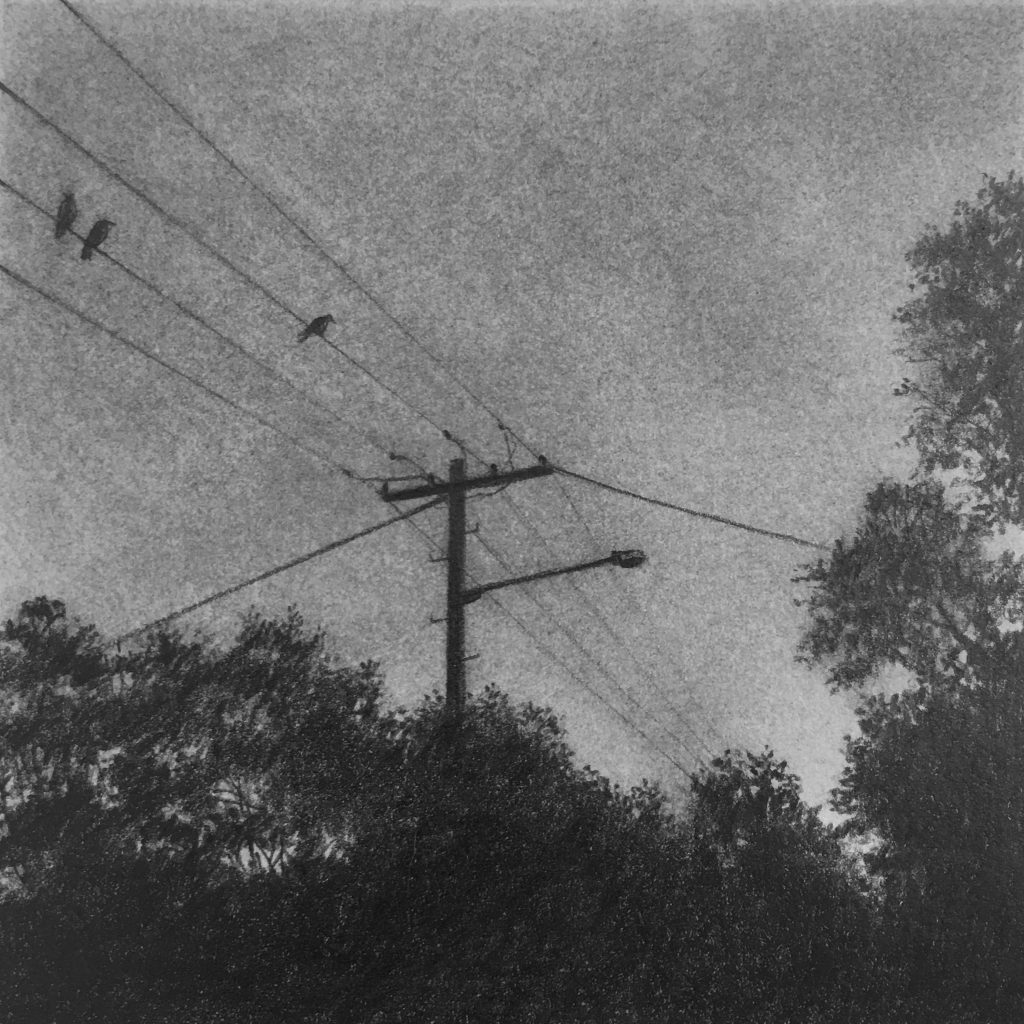 graphite drawings - birds on the wire