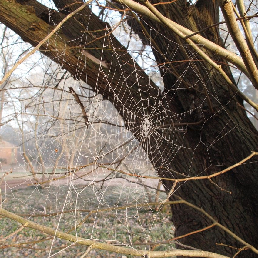 photography - winter spider webs goulburn