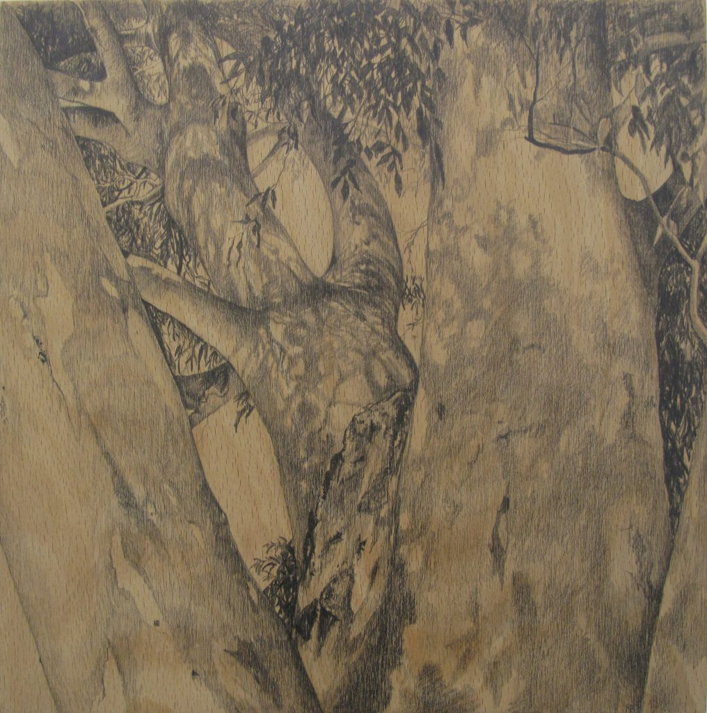graphite drawings - the birthing tree larapinta