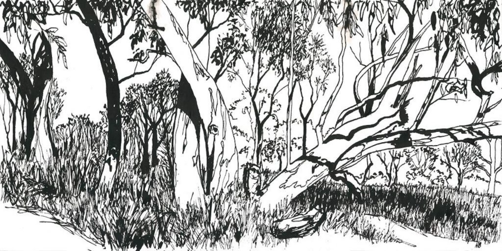 ink drawings - among the trees